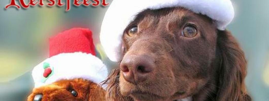 Bijna kerst; hoe brengt je hond de feestdagen door?